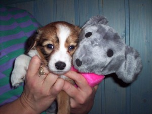 Pikku Ella ja hiiri