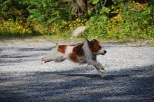 Koiranpäivät2008, kuva Anne Rask