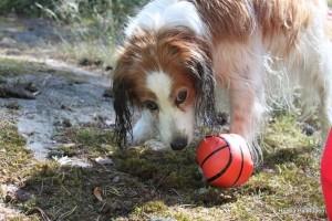 Lempi ja pallo-10, kuva Henna Palmunen