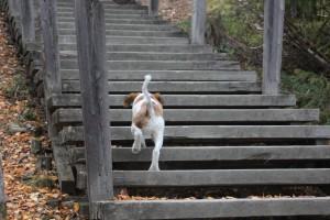 viimeisiä portaita