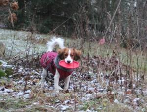 Pinkan frisbee-leikki