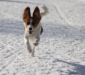 Prinka nauttii juoksemisesta