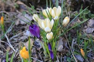 krookukset kukassa kotipihalla