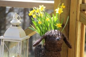narsissit vähän pääsiäisen jälkeen
