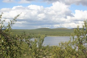 tunturikoivikkoa ja järvimaisemaa