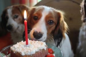 Prinka ja kakku