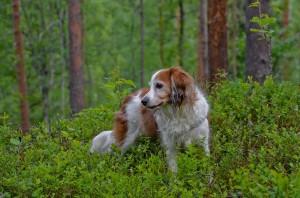 Tessa metsässä