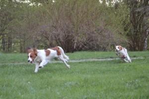 hippaa ja painia Prinka ja Ella